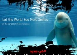 کمک هایک ویژن به سازمانها در جهت حفاظت از تنها پستاندار دریای چین که در خطر انقراض است !