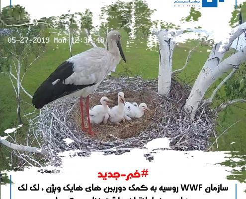 سازمان WWF روسیه به کمک دوربین های هایک ویژن ، لک لک های در خطر انقراض را تحت نظر می گیرد !